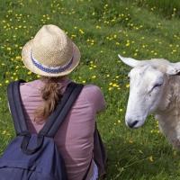 Caroline & Sheep