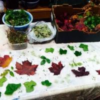 Eco-printing courses
